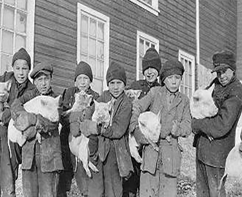 group of students holding pigs in front of Brandon school building